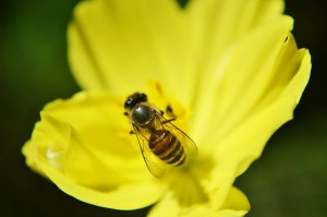 pollinate and fly away, just like a man